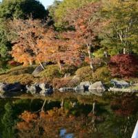 昭和記念公園の紅葉・・1