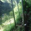 竹藪下 継箱
