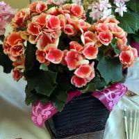 【5月13日(日)】母の日まであと1か月!イイハナ・ドットコムさんのおすすめ&売れ筋商品を聞いてきました~