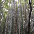 京都 🚙💨💨💨