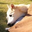 愛犬まるが枯らした芝生