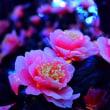 4484 輝く花