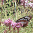 移動とネジと蝶と