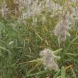 もみじ狩り 栃木県日光市奥日光(5)ラムサール条約登録の湿地 奥日光の湿原