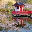 茂原公園の桜1