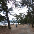 天橋立(シーズン終盤『かに』づくし)観光5