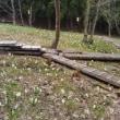 水芭蕉の森
