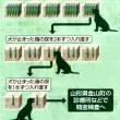 尿のにおい実験で100%識別・・・がん探知犬