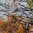 秋深し それでも花を 咲かせてる
