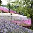 芝桜の小道 2 (ヤマサ蒲鉾) 姫路市 2018.04.26