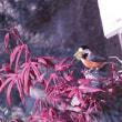 山雀の巣造り