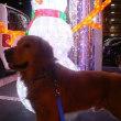 """""""南町ドッグラン""""で色んな大型犬と遊びました 🎵"""
