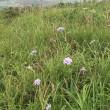 山梨・長野の旅  白樺湖から車山高原、そして崖の湯温泉編
