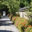 22日の散歩 ( 今宮神社、大徳寺、船岡山、十二坊蓮臺寺への散歩で夏だより )