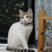 猫(ニャンニャン)の日