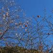 紅葉と桜花のコラボレーション 小原四季桜まつり 4