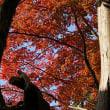 紅葉真っ盛り 11月17日(金)晴れ時々曇り