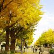 日本大通り黄葉散歩(横浜市中区)