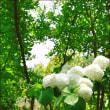 花フェスタ記念公園 その3