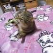 温かな敷布団があるとエキサイトする猫!