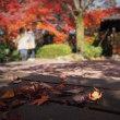 石橋文化センターの紅葉ー秋の名残り