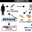 『iPS細胞医療』血小版量産から臓器作製まで