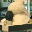 京都 錦市場でアボガドを食すウサギモドキ現る。白と黒の伝説ふたたび!