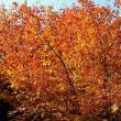 兄弟山周辺の紅葉
