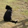 香櫨園駅 ネコさんがお出迎え。