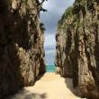 《万座毛~瀬底島~備瀬のフクギ並木とワルミ》2017年沖縄本島2