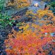 素晴らしい紅葉の眺め (南伊勢町斉田)