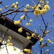 今日は関西地区3月上旬並の気温、温かいです