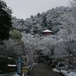 ☆ 雪降りの中、えさを食する野生リスの姿、ドキドキ眺め ☆ G公園(岐阜県岐阜市)