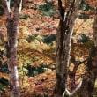 梅が瀬渓谷