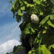 見上げた空は・・白いゴーヤと花