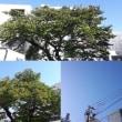 10月22日(月)今日の北川桜