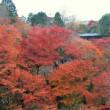 2017 紅葉散策11 東福寺