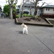 ハナちゃん お散歩 💑👀気持ちイイネ!💑雨上がりの午後 10歳