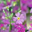花彩々  春の花