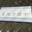 横浜市都筑区の苔寺 龍雲寺の菩提樹