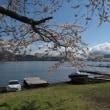 桜満開の山中湖畔