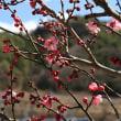 18年3/23~木曽福島地区~~花だより~⑪