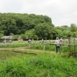 北山公園菖蒲苑