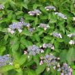 初夏の徳島植物園