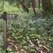 新緑の上高地散策 3