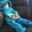 ◯  在豪アメリカ大使館から「猫のパジャマ・パーティ」のメールが届いて世界が衝撃
