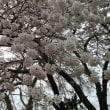 ☆桜の便り☆