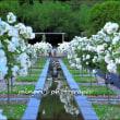 花フェスタ記念公園 5/26撮影