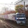 紅葉の静岡駅付近を通過する「トヨタロンパス」 (オマケはイルミネーション)