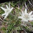 花の名峰早池峰山